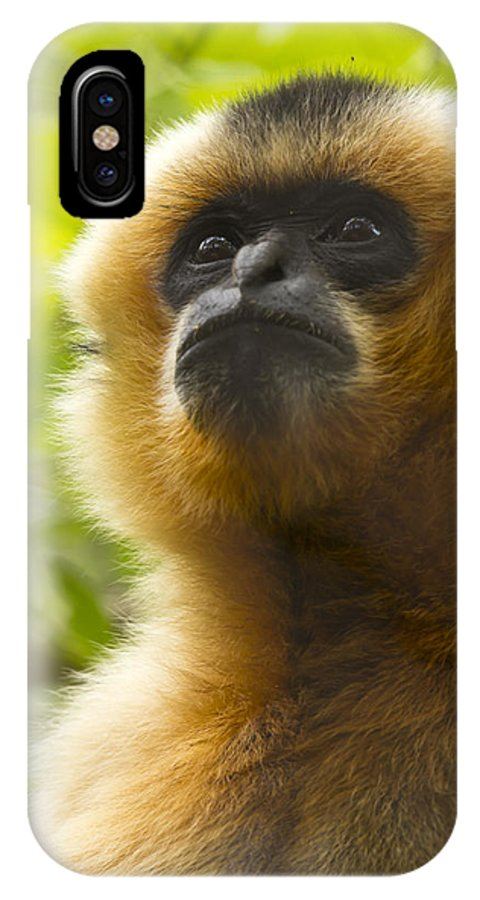 A Monkey Looking At Something In Amazement IPhone X / XS Case featuring the photograph Amazement by Nicholas Evans
