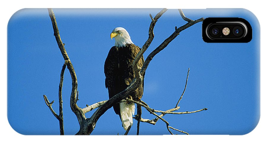 Animals IPhone X / XS Case featuring the photograph American Bald Eagle Haliaeetus by Joel Sartore