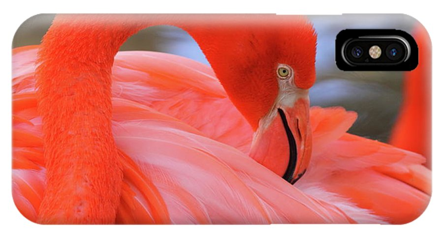 Flamingo IPhone X Case featuring the photograph American Flamingo by Bruce J Robinson