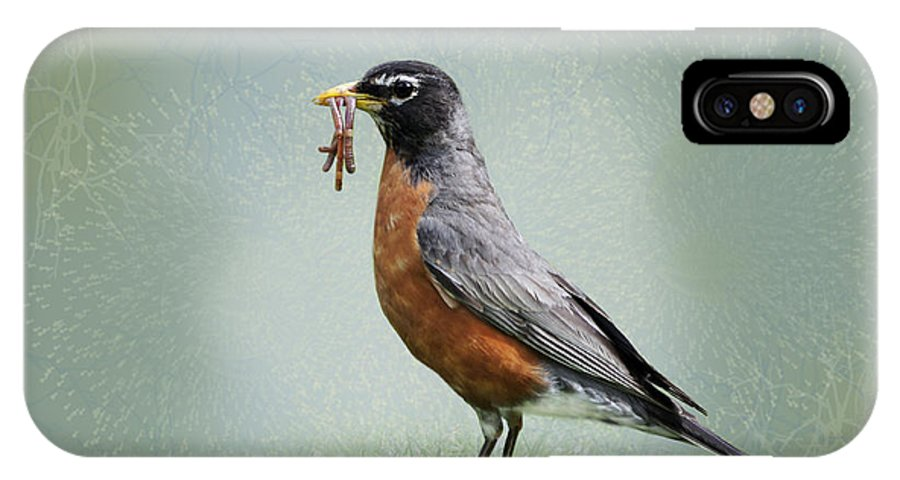 American Robin IPhone X Case featuring the photograph American Robin With Worms by Betty LaRue