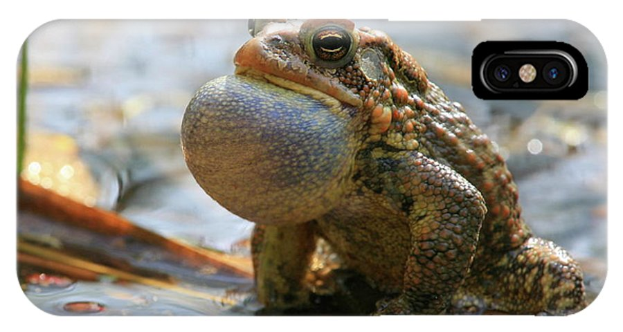 Toad IPhone X Case featuring the photograph American Toad Croaking by Bruce J Robinson