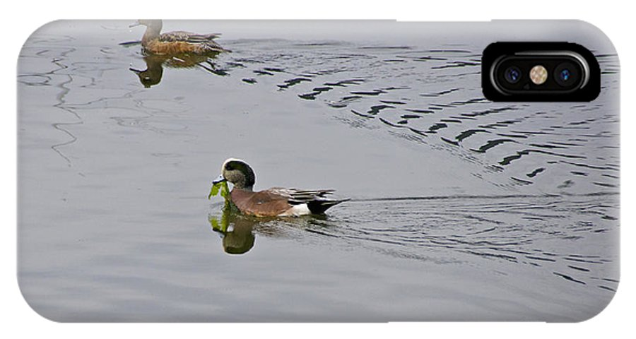 Photography IPhone X Case featuring the photograph American Wigeons by Sean Griffin