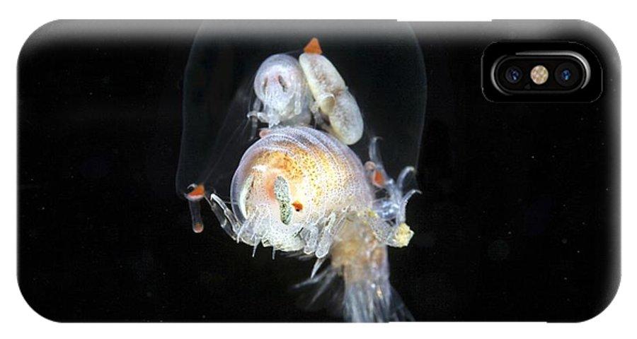 Hyperia Galba IPhone X / XS Case featuring the photograph Amphipods Inside A Hydromedusa by Alexander Semenov