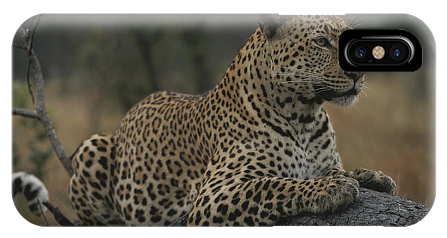 Africa IPhone X / XS Case featuring the photograph An Alert Leopard Rests On A Fallen Tree by Kim Wolhuter