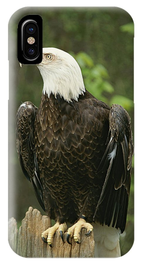 Animals IPhone X / XS Case featuring the photograph An American Bald Eagle Perches Atop by Norbert Rosing