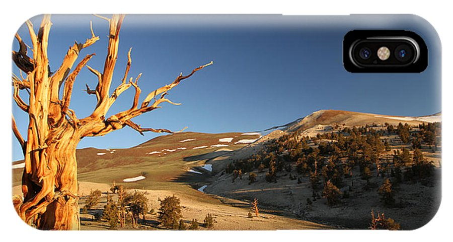 Bristlecone Pine Tree IPhone X Case featuring the photograph Ancient by Adam Jewell