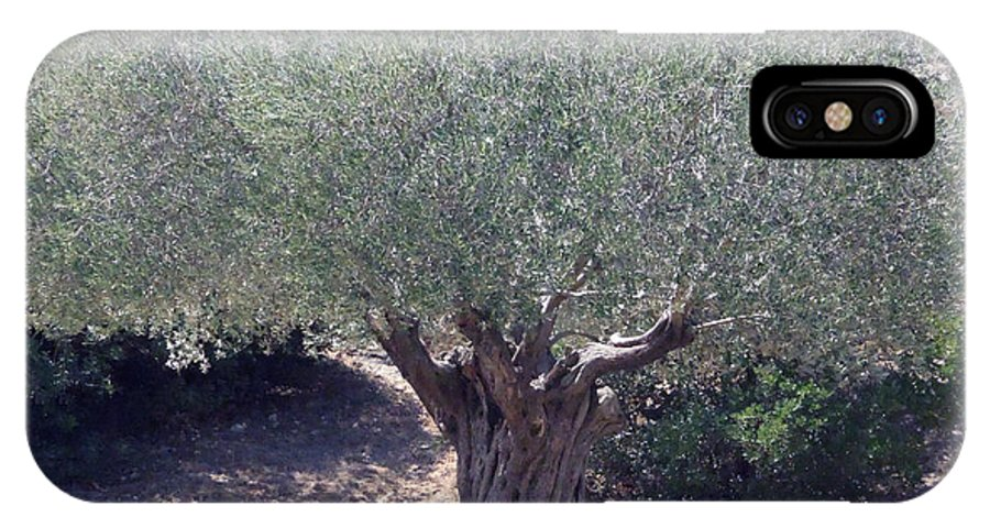 Colette IPhone X Case featuring the photograph Ancient Old Olive Tree In South France by Colette V Hera Guggenheim