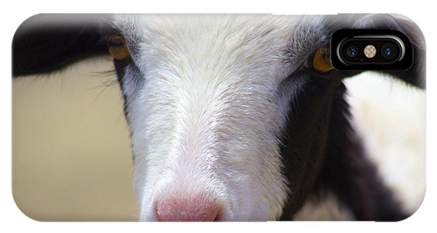 Anguilla IPhone X Case featuring the photograph Anguilla Goat by Jennifer Lamanca Kaufman