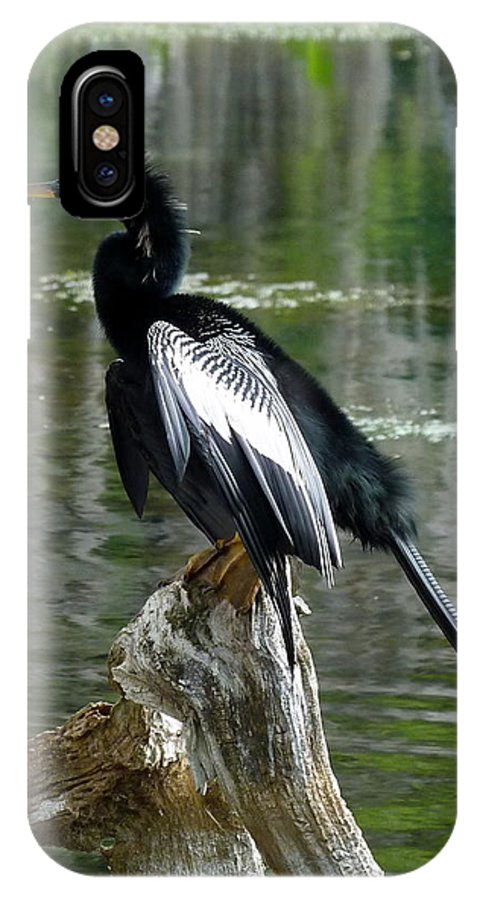Anhinga IPhone X Case featuring the photograph Anhinga by Carla Parris