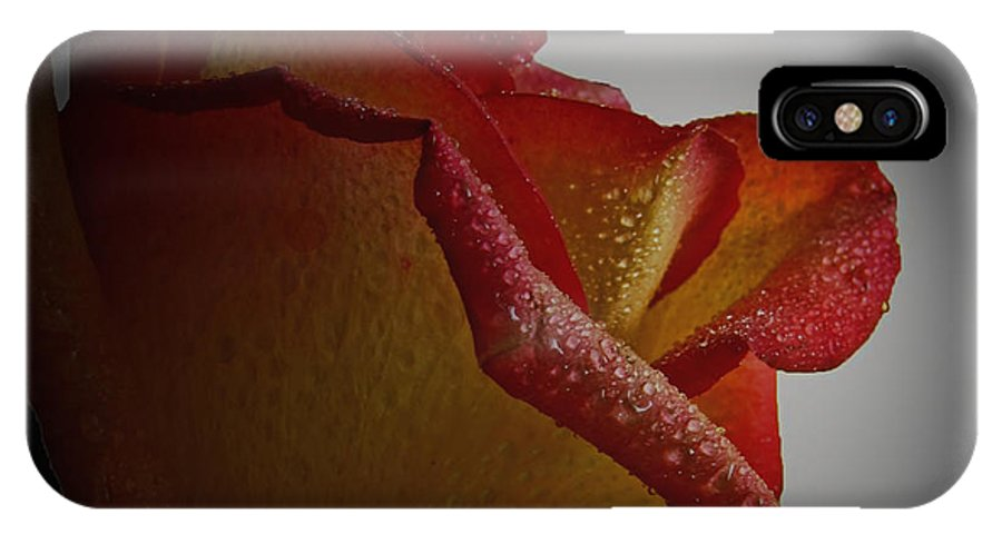Nature IPhone X Case featuring the photograph Anniversary Rose by Debbie Portwood