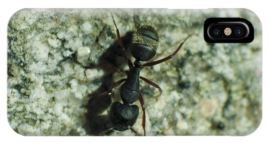 Yosemite IPhone X Case featuring the photograph Ant by M Valeriano