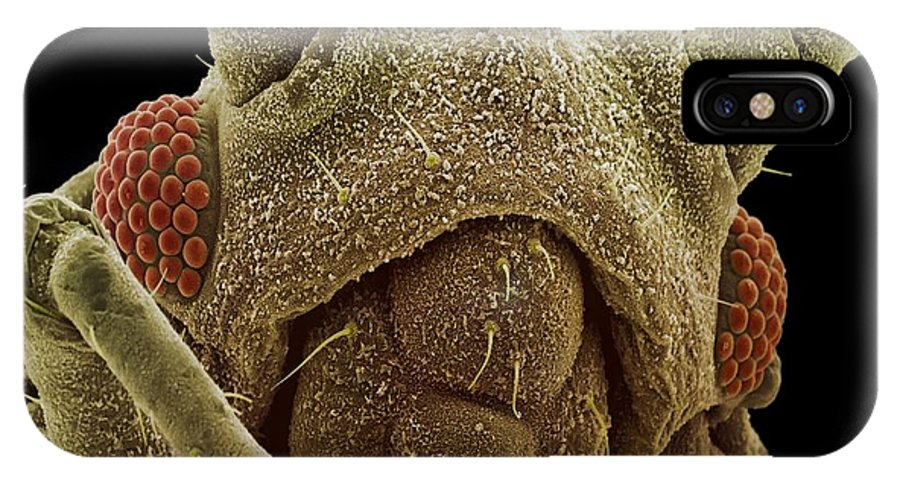 Aphid IPhone X Case featuring the photograph Aphid Head, Sem by
