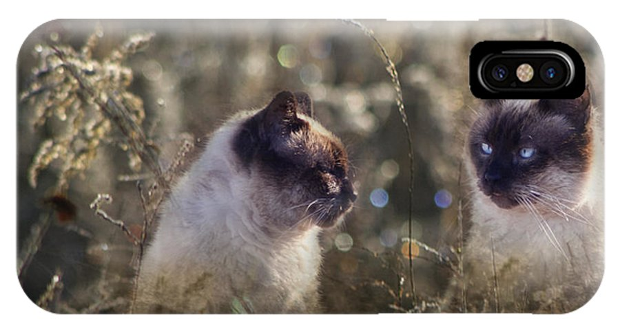 Siamese IPhone X / XS Case featuring the photograph Are You Dreaming About Me - Siamese Feral Cat by Kathy Clark