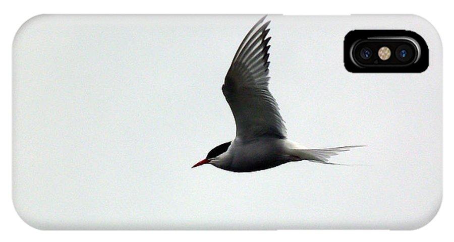 Artic Tern IPhone X Case featuring the photograph Artic Tern by Lynn Bolt