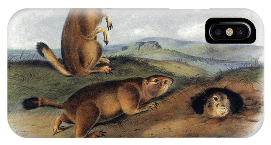 1844 IPhone X Case featuring the photograph Audubon: Prairie Dog, 1844 by Granger