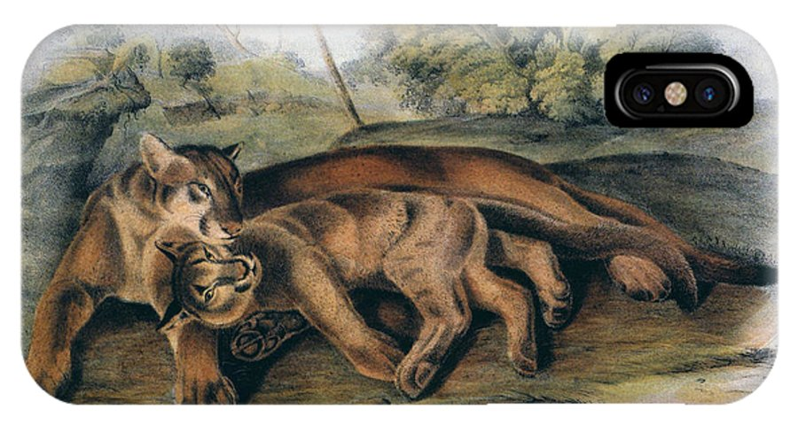 1844 IPhone X Case featuring the photograph Audubon: The Cougar by Granger