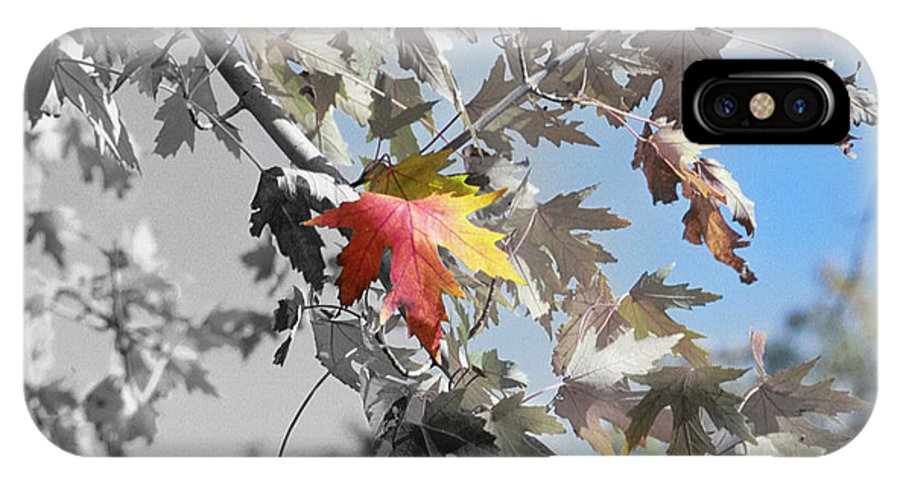 IPhone X Case featuring the photograph Autumn Beauty by Michael Frank Jr
