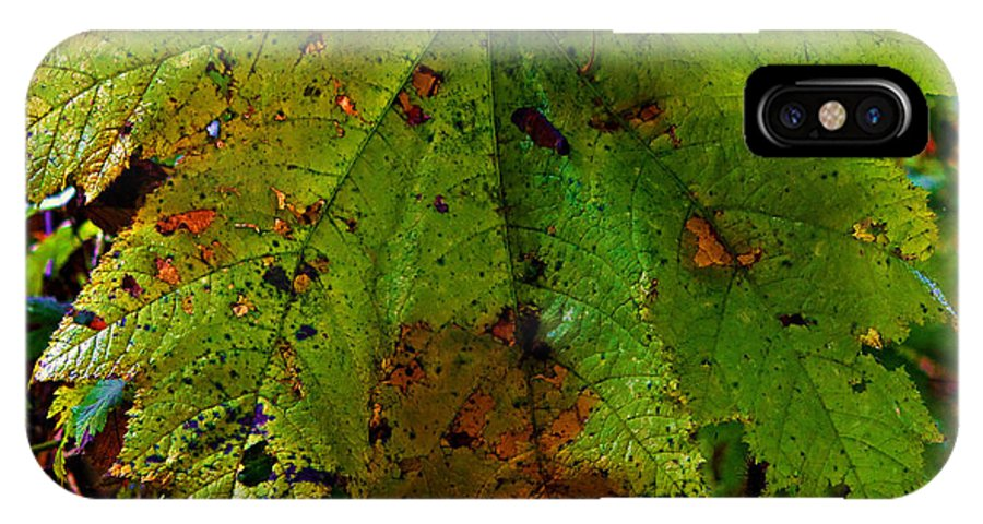 Leaf IPhone X Case featuring the photograph Autumn Leaf by Jeanette C Landstrom