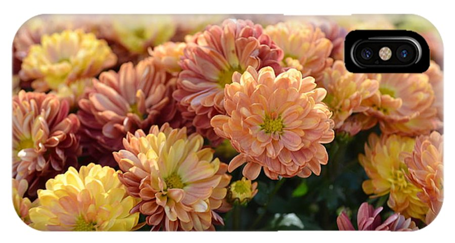 Mum IPhone X Case featuring the photograph Autumn Mums by P S