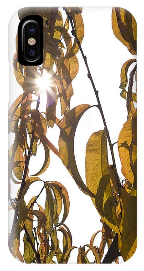 Autumn IPhone X / XS Case featuring the photograph Autumn Sunburst by Ian Middleton