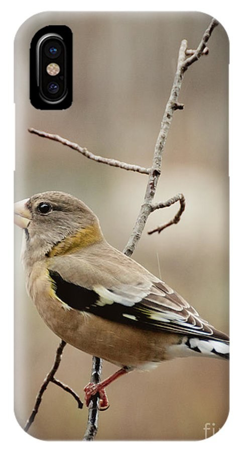 Grosbeak IPhone X Case featuring the photograph Autumn Wildlife by Cheryl Baxter