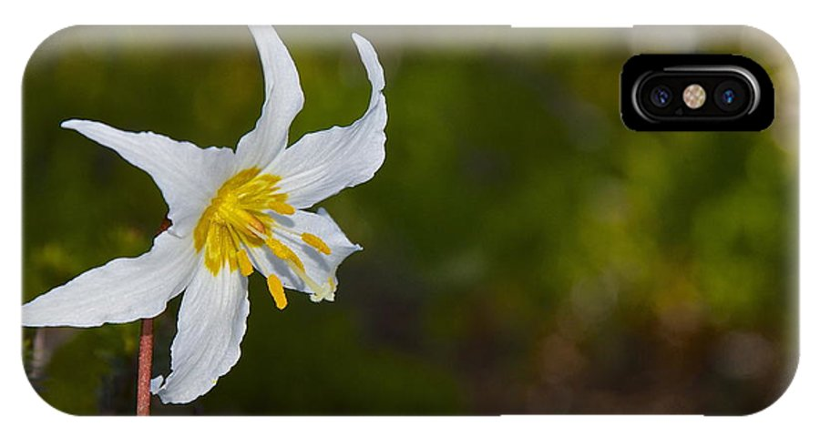 Photography IPhone X Case featuring the photograph Avalanche Lily by Sean Griffin
