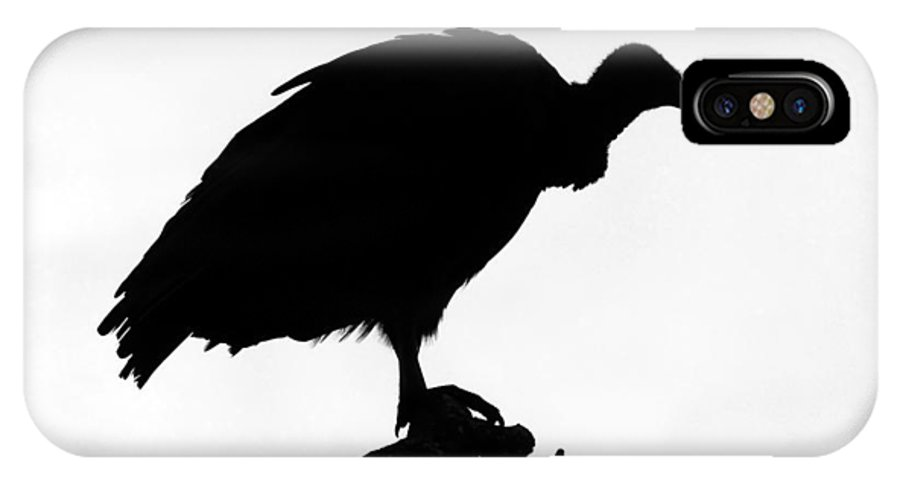 Bird IPhone X / XS Case featuring the photograph Awaiting Death by David Lee Thompson