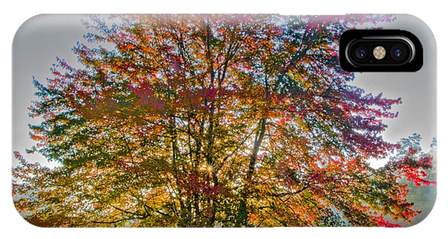 Maple IPhone X / XS Case featuring the photograph Backlit Maple In Autumn's Light by Rob Travis