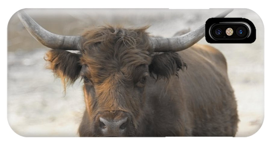 Scottish Highlander IPhone X Case featuring the photograph Bad Hair Day V2 by Douglas Barnard
