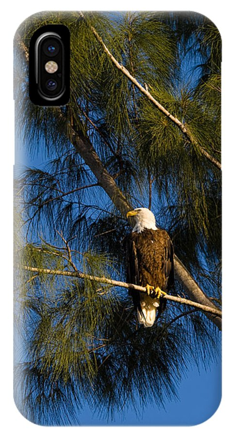 Bald Eagle IPhone X Case featuring the photograph Bald Eagle by Ed Gleichman
