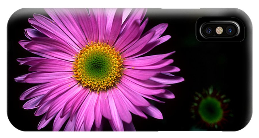 Subalpine Fleabane IPhone X Case featuring the photograph Banff - Subalpine Fleabane by Terry Elniski