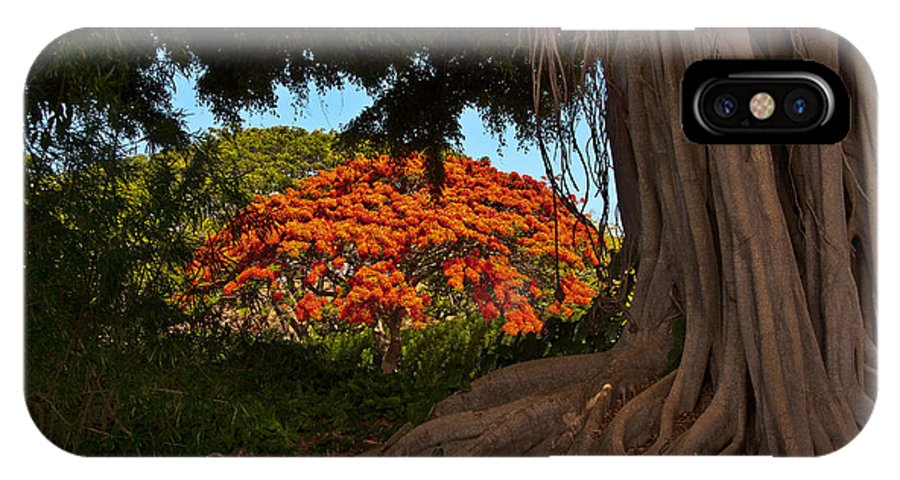 Poinciana IPhone X Case featuring the photograph Banyan And Poinciana Trees by Roger Mullenhour