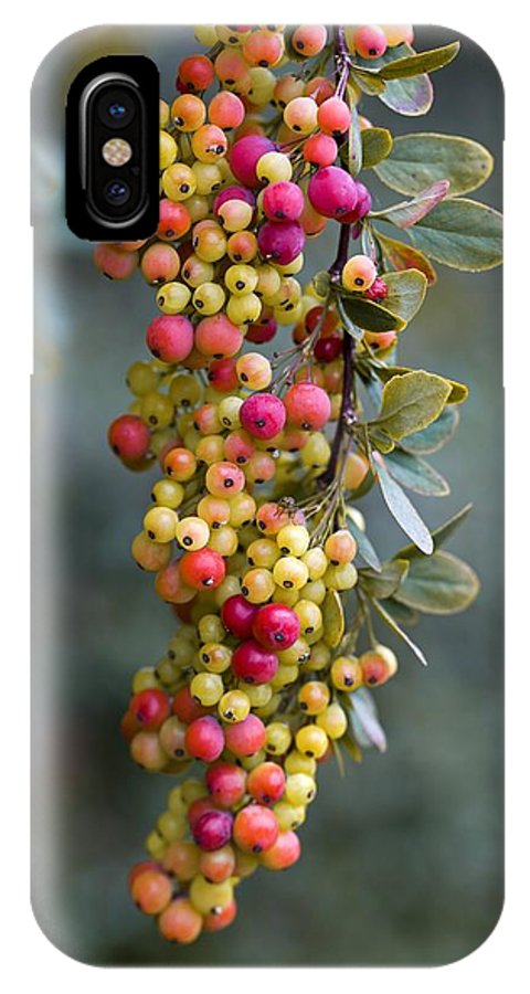 Barberry IPhone X / XS Case featuring the photograph Barberry (berberis Sp.) by Dr Keith Wheeler