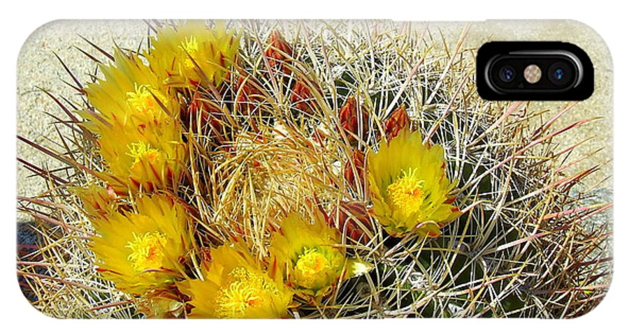 Anza Borrego IPhone X Case featuring the photograph Barrel Cactus by Christie Starr Featherstone