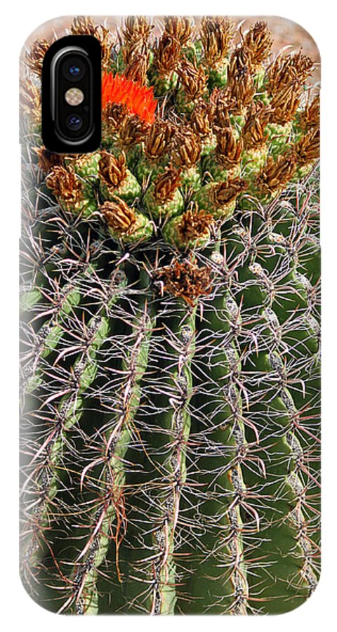 Cactus IPhone X Case featuring the photograph Barrell Cactus II by Suzanne Gaff