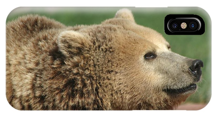 Bear IPhone X Case featuring the photograph Bear Profile by Living Color Photography Lorraine Lynch