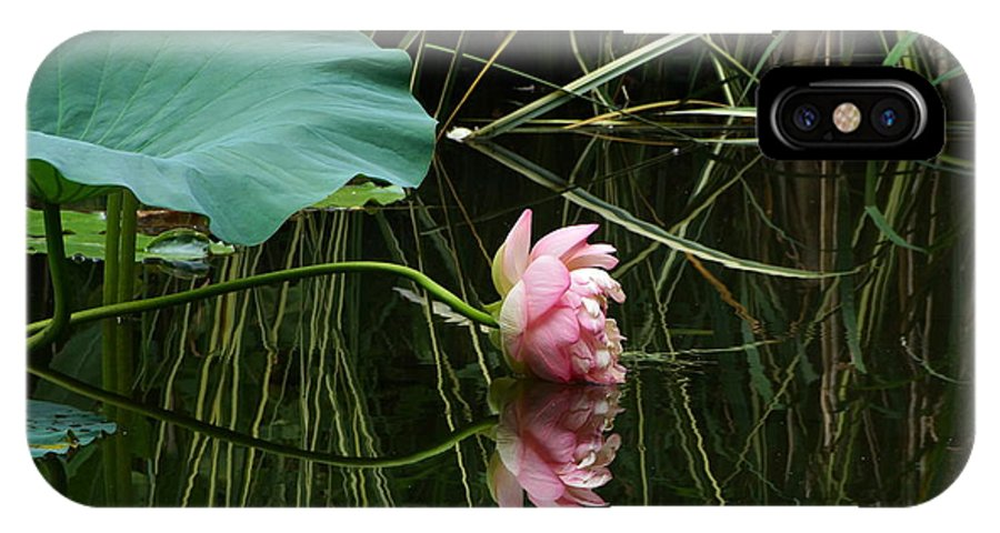 Nelumbo Lutea Nucifera IPhone X Case featuring the photograph Beautiful Fallen Lotus by Byron Varvarigos