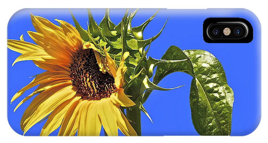 Sunflower IPhone X Case featuring the photograph Beautiful Moves In Curves by Gwyn Newcombe