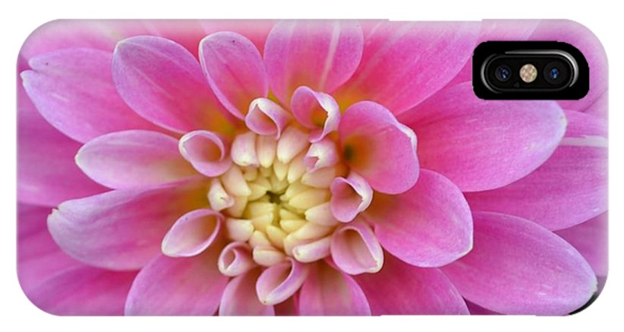 Pink Dahlia Flower IPhone X Case featuring the photograph Beautiful Pink Dahlia Flower by P S
