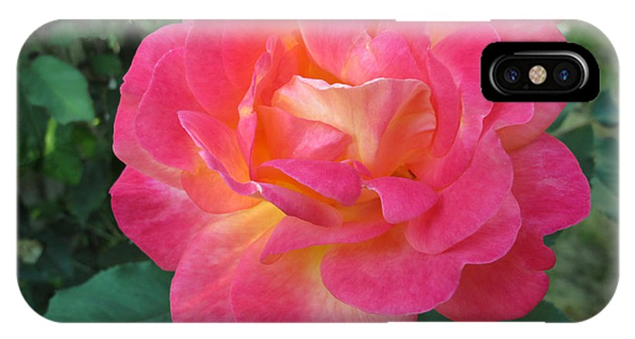Rose IPhone X Case featuring the photograph Beauty by Arlene Carmel