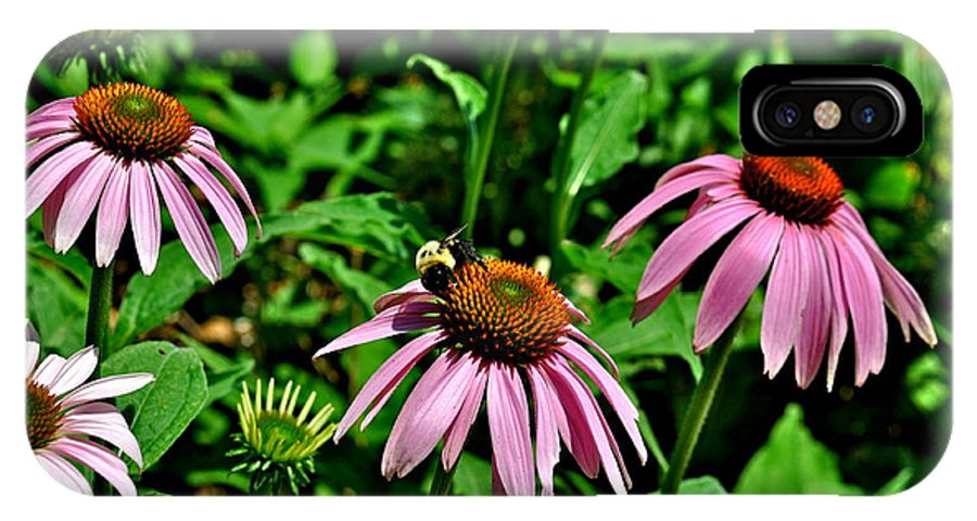 Bee Photographs IPhone X / XS Case featuring the photograph Bee And Flower by Catherine Conroy