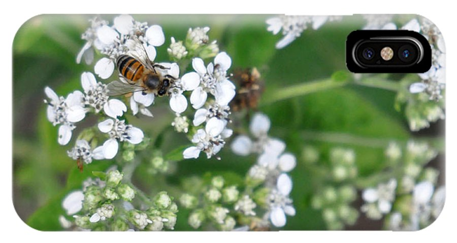 Teresa Blanton IPhone X / XS Case featuring the photograph Bee Of The White Flower by Teresa Blanton