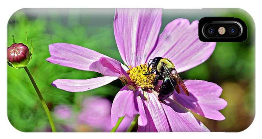 Insect IPhone X Case featuring the photograph Bee On Flower by Susan Leggett