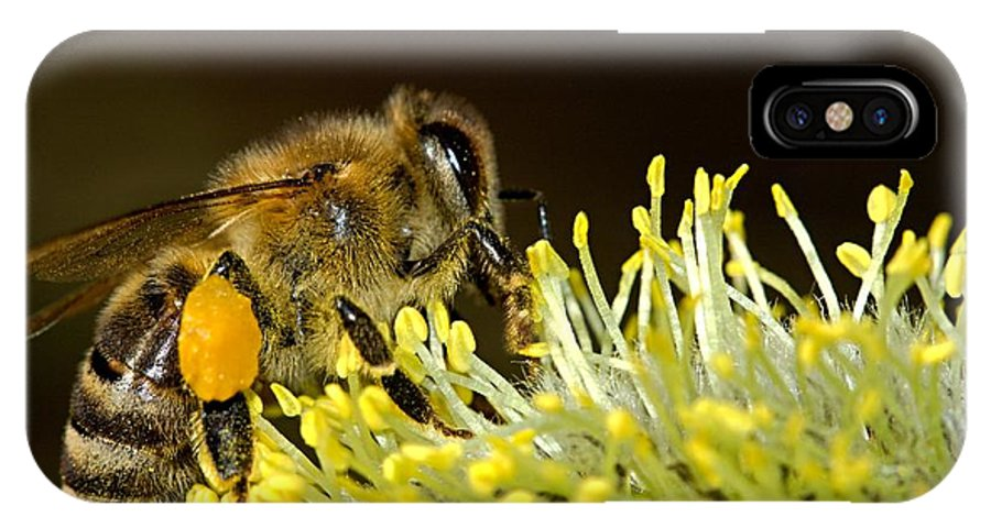 Bee IPhone X Case featuring the photograph Bee by Tilen Hrovatic