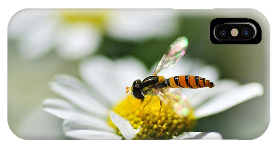 Photography IPhone X Case featuring the photograph Bee With Rainbow Wings by Kaye Menner