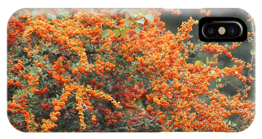 Tree IPhone X Case featuring the photograph Berry Orange by Karen Wagner