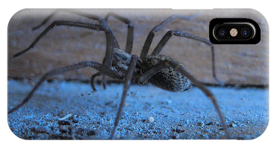Big Brown Spider IPhone X Case featuring the photograph Big Brown Spider by Kym Backland
