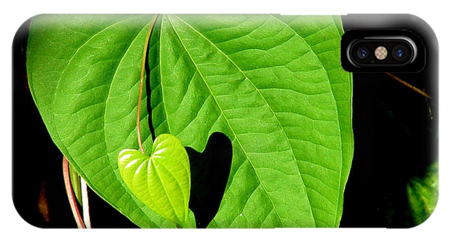 Leaf IPhone X Case featuring the photograph Big Heart Little Heart by David Weeks