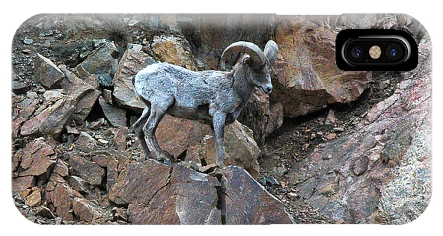 Colorado IPhone X Case featuring the photograph Big Horn Sheep by Kimberlee Fiedler