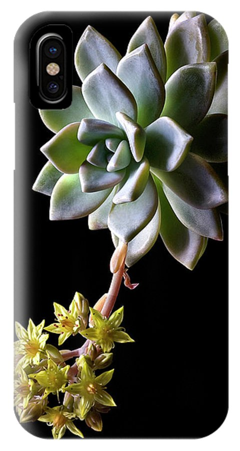 Flower IPhone X Case featuring the photograph Big Sedum by Endre Balogh